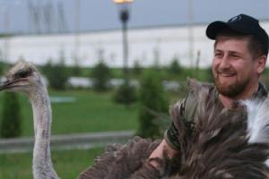 Рамзан Кадыров и страус ©http://instagram.com/alihan777/