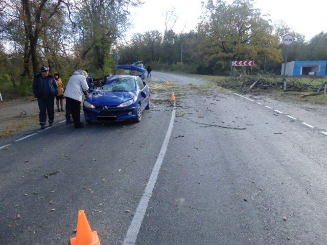 Наиномарку смладенцем-пассажиром рухнуло дерево наКубани