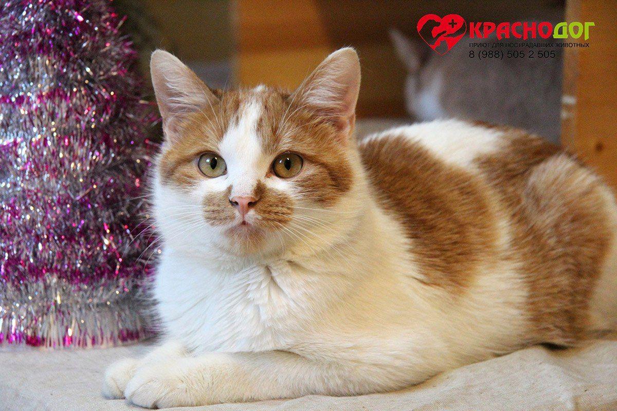 Кот из приюта «Краснодог»