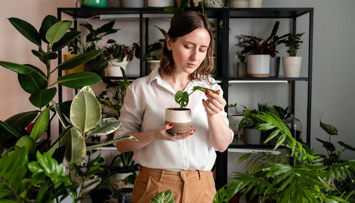 Как завести комнатные растения и не погубить их