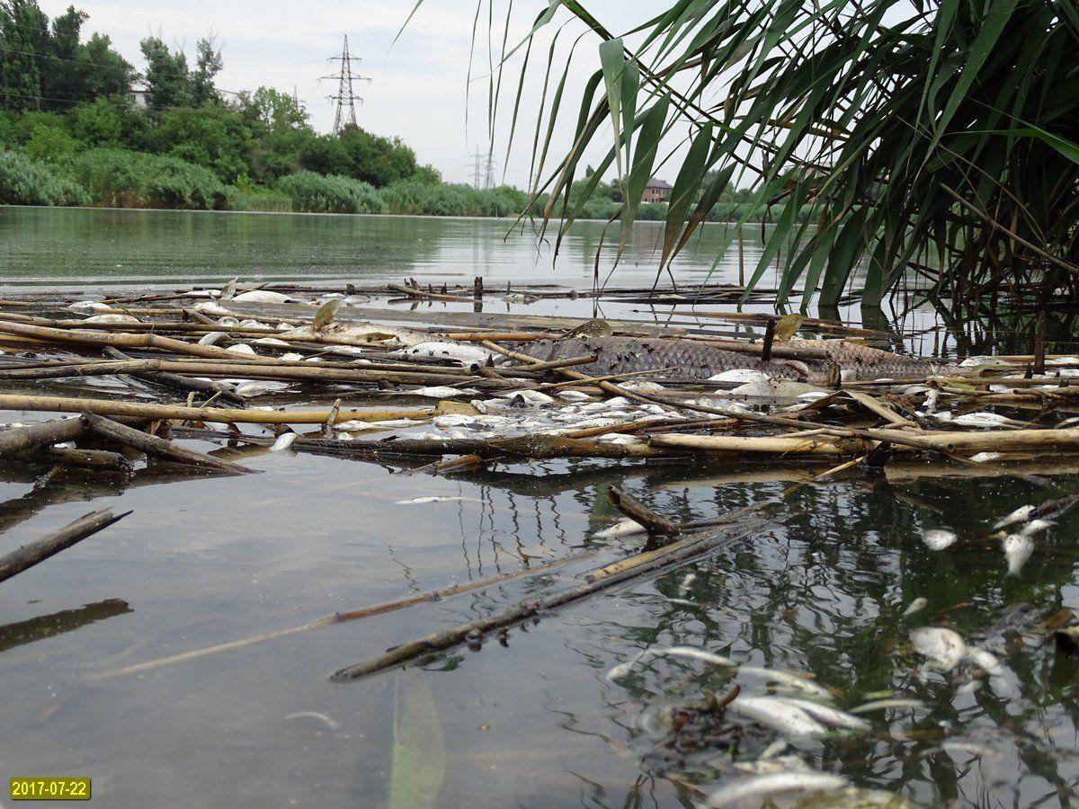 Массовый замор рыбы произошел наКарасунском озере вКраснодаре