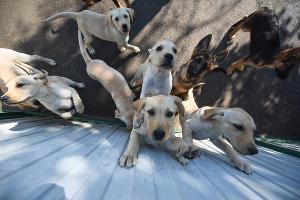 В кинологической службе Краснодара родилось 32 щенка ©Елена Синеок, ЮГА.ру