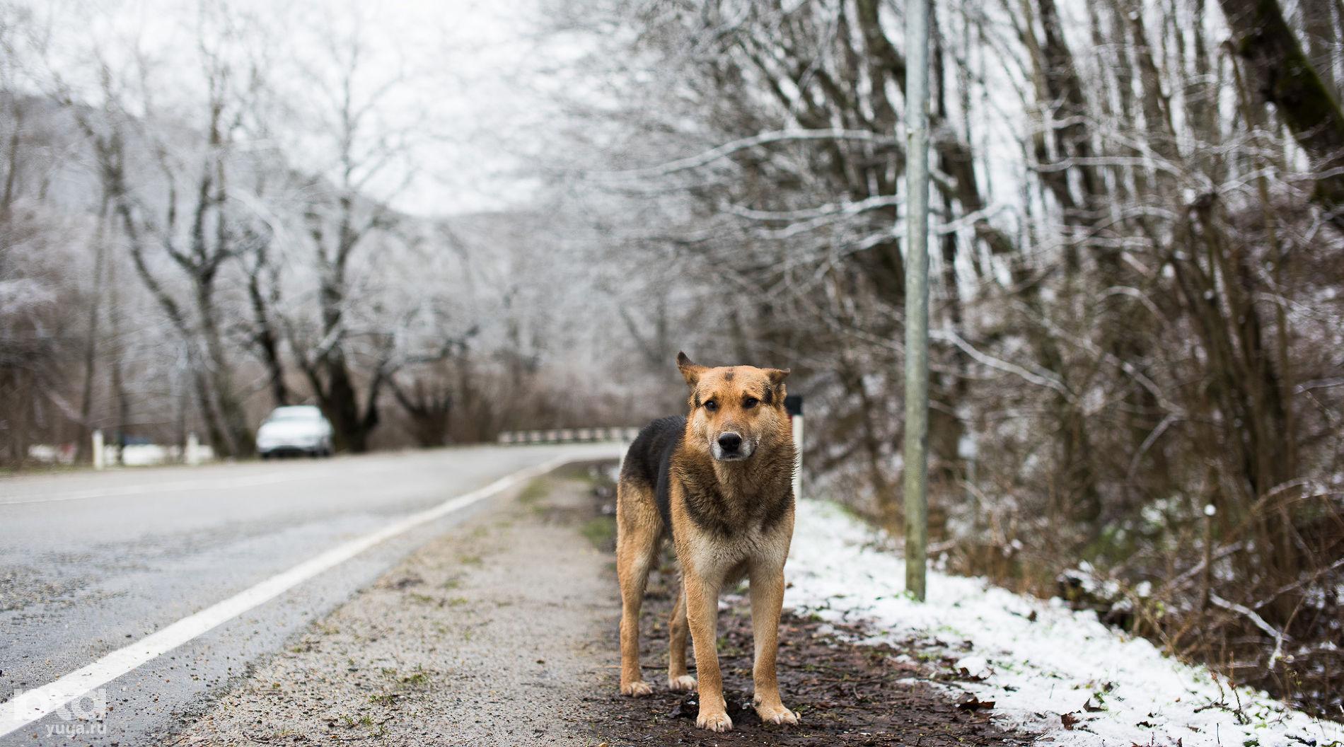 При случае, подкармливайте местных жителей. Они будут очень благодарны ©Фото Елены Синеок, Юга.ру