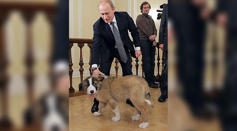 Владимир Путин и Баффи, фото: Коммерсантъ ©Фото Юга.ру