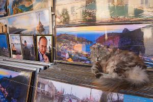 Кот и Путин ©Елена Синеок, ЮГА.ру