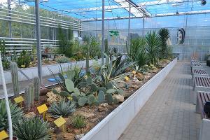 Общий вид экспозиции флоры Центральной Америки ©Фото Ботанического сада ЮФУ
