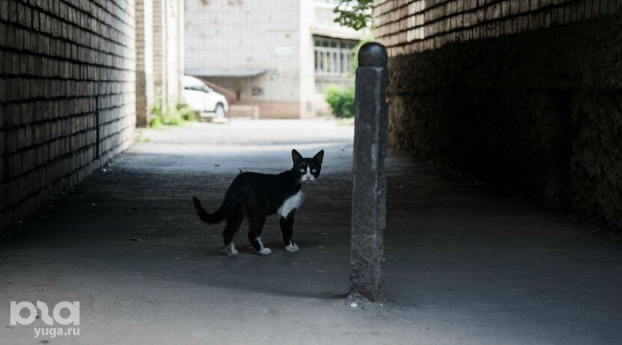 Жители окрестных домов недоумевают ©Фото Елены Синеок, Юга.ру