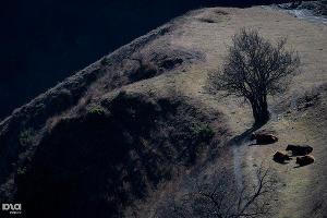"""Памятник архитектуры """"Хамишки"""" в Джейрахском ущелье в Ингушетии ©Елена Синеок, ЮГА.ру"""