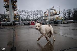"""""""Газпром"""" ввел новые мощности на КС """"Краснодарская"""" ©Елена Синеок, ЮГА.ру"""