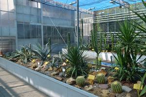 Экспозиция флоры Мексиканского нагорья ©Фото Ботанического сада ЮФУ