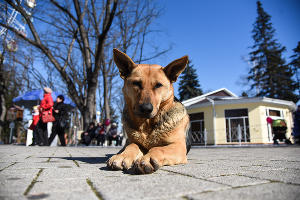 Масленица в Краснодаре ©Елена Синеок, ЮГА.ру