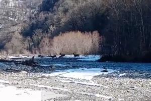 ©Скриншот видео из инстаграма Сочинского национального парка, instagram.com/p/CNCdL8JFbMB/