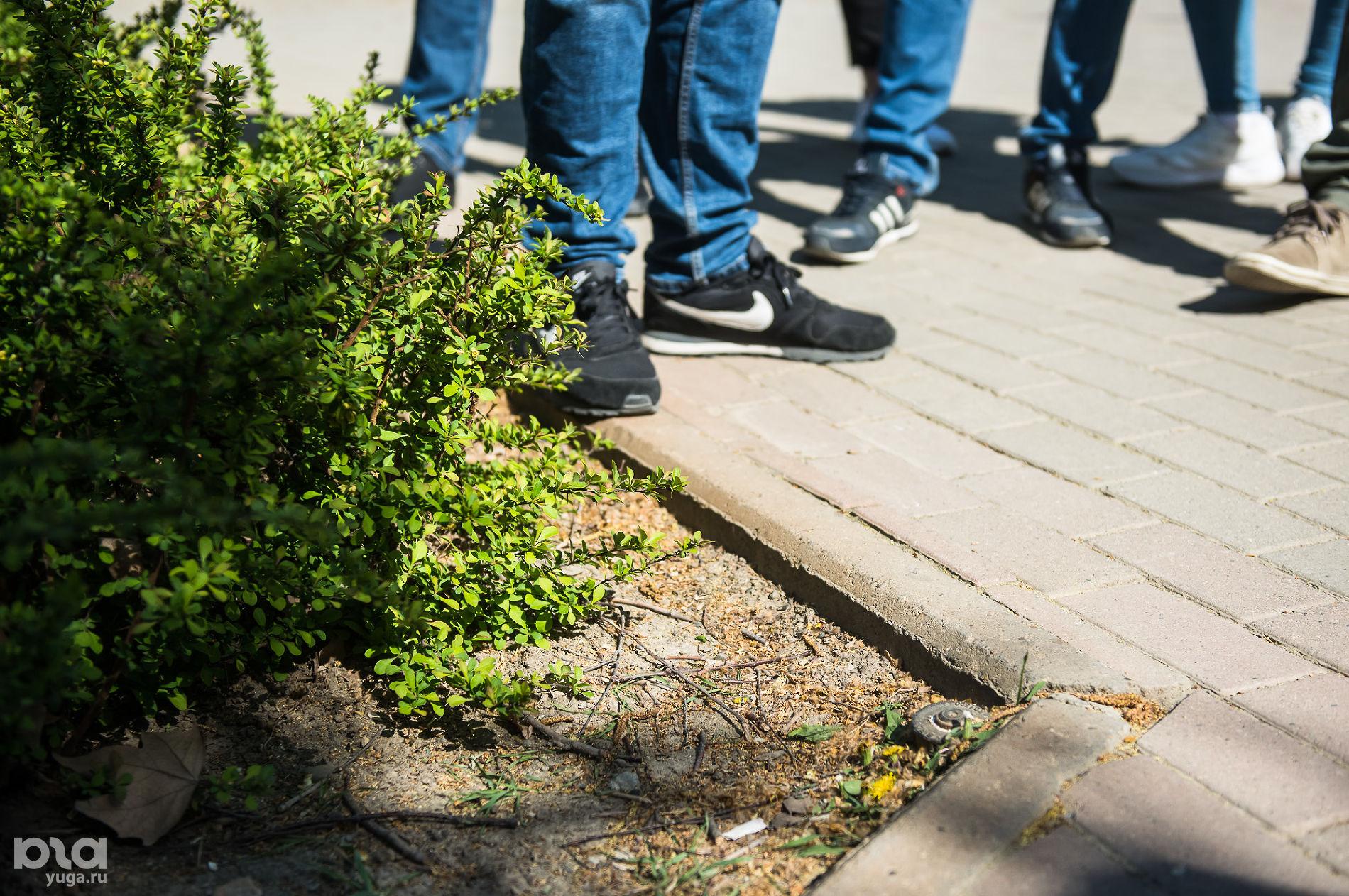 Платановый бульвар ©Фото Елены Синеок, Юга.ру