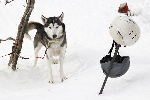 Гонка на собачьих упряжках «Лагонаки-2017» ©Фото Влада Александрова, Юга.ру
