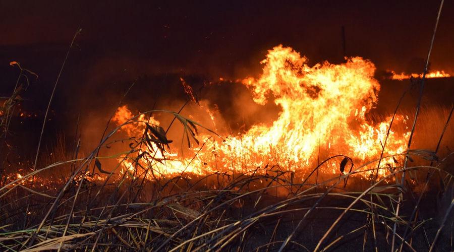 ©Фото Алины Десятниченко для «Добровольных пожарных Кубани»