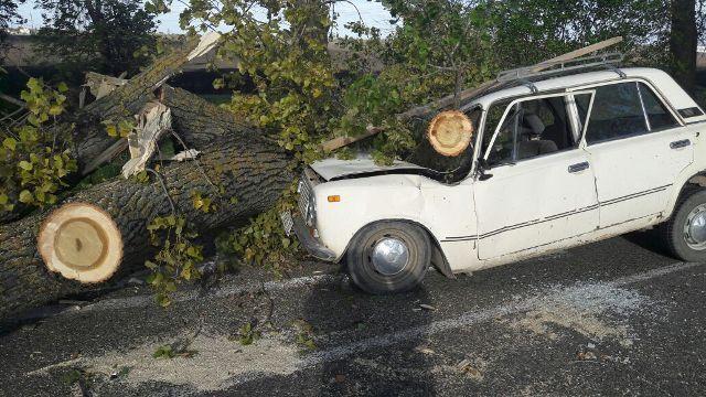 ВКраснодаре на«ВАЗ» рухнул тополь