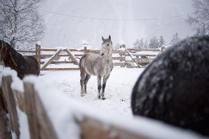 Снегопад в Кабардино-Балкарии ©Фото Антона Подгайко, Юга.ру