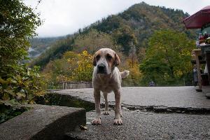 В Абхазии повсеместно бегают дружелюбные псы ©Елена Синеок, ЮГА.ру