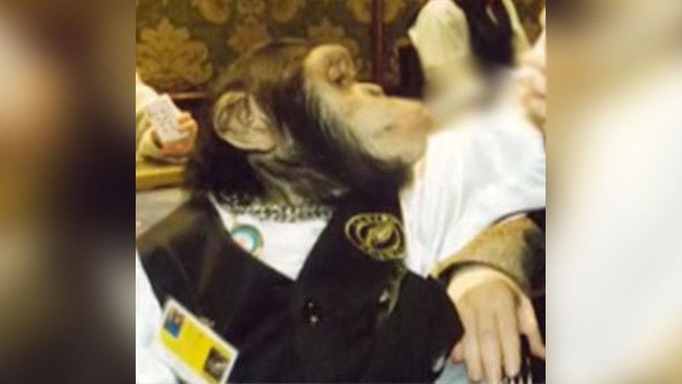 Взоопарке Геленджика отинсульта скончался шимпанзе Джон