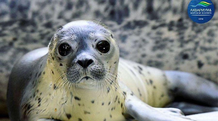 ©Фото пресс-службы сочинского аквариума