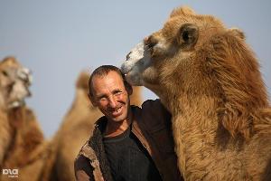 2011 год в фотографиях. В Чечне начали разводить верблюдов ©http://www.yuga.ru/photo/966.html