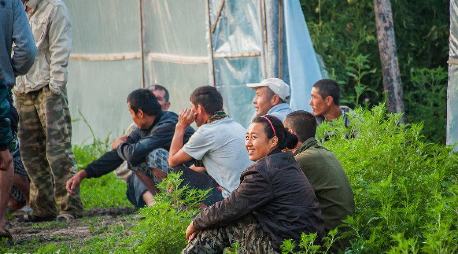 Рейд по выявлению незаконных мигрантов на Кубани ©Николай Ильин, ЮГА.ру