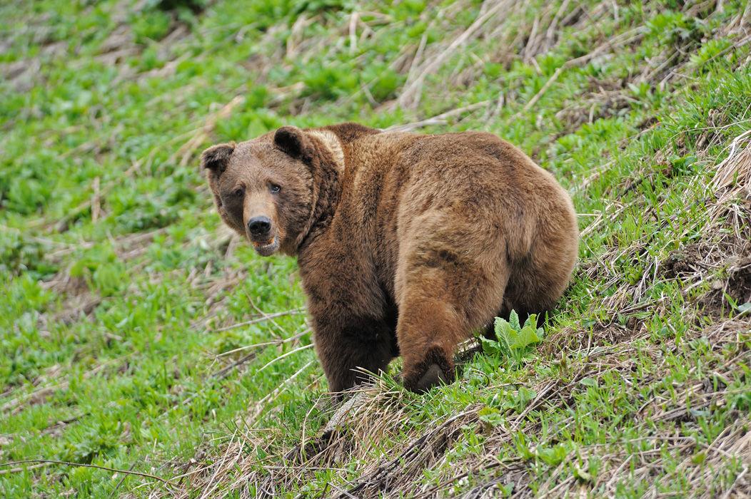 Медведь в Кавказском заповеднике ©Фото Дмитрия Андреева, mountaindreams.ru