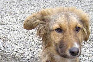Собаки ©Юга.ру