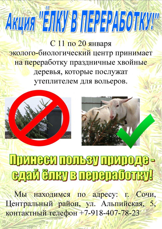 ©Картинка с сайта ebc.sochi-schools.ru