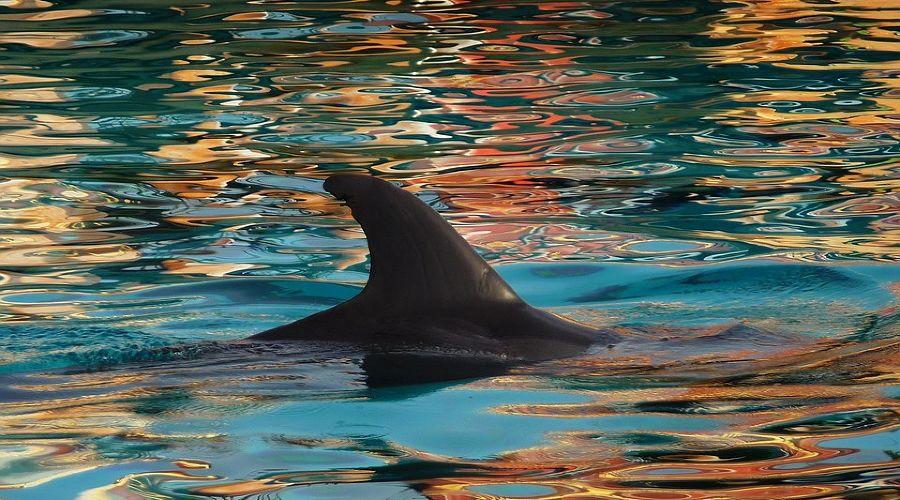 Дельфин ©Фото с сайта pixabay.com