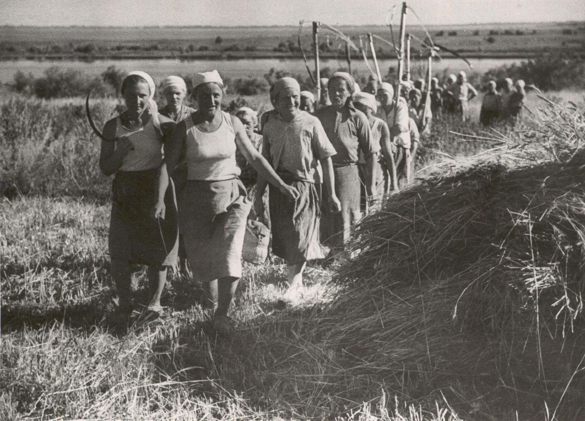 Уборка урожая в колхозе им. Ивко Пластуновского (Динского) района. Лето 1943 года
