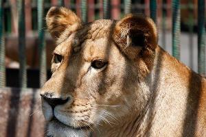 Владикавказский зоопарк ©Влад Александров, ЮГА.ру