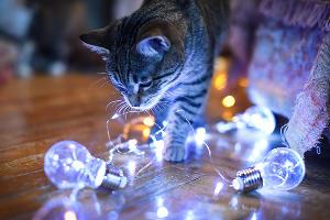 Кот Вася (6 месяцев) изучает свою первую в жизни новогоднюю гирлянду  ©Елена Синеок, Юга.ру