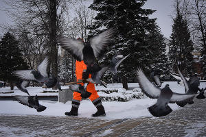 Снегопад в Краснодаре ©Фото Елены Синеок, Юга.ру