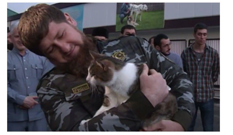 Кот кадырова