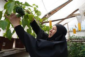 Монахиня собирает урожай в теплицах ©Фото Виталия Тимкива, Юга.ру