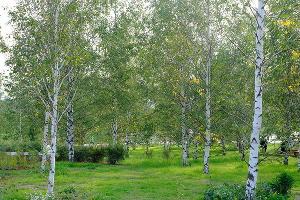 Парк «Зарядье» ©Фото с сайта zaryadyepark.ru