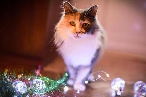 Кошка Маша, 3 года ©Елена Синеок, Юга.ру