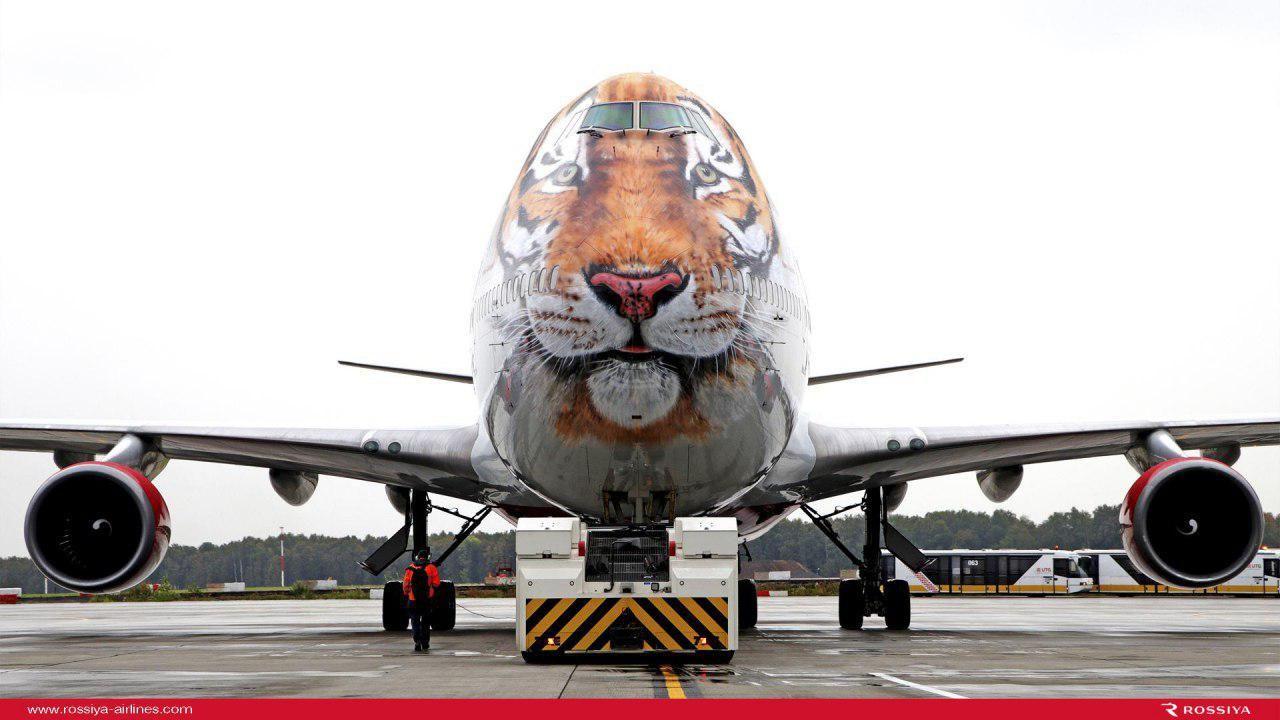 «Тигролет» ©Фото предоставлено авиакомпанией «Россия»