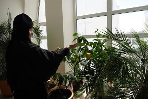 Зимний сад при монастыре. Здесь выращивают цветы, лимоны, мандарины и экзотические растения ©Фото Виталия Тимкива, Юга.ру
