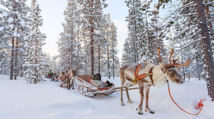 Оленья ферма в Красной Поляне ©Фото пресс-службы горно-туристического центра «Газпром»