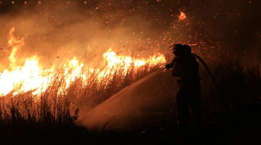 Пожар в плавнях Анапы ©Фото пресс-службы администрации Анапы