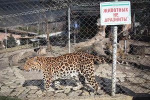"""""""Сафари-Парк"""" в Геленджике ©Елена Синеок, ЮГА.ру"""