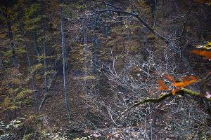 Водопады Руфабго в Адыгее ©Елена Синеок, ЮГА.ру