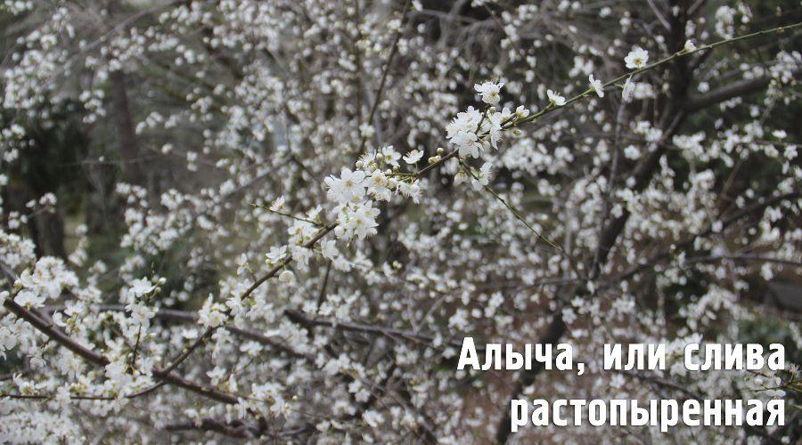 ©Фото пресс-службы Сочинского нацпарка