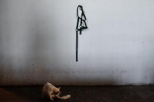 """Конезавод """"Кавказ"""" в Курганинском районе ©Николай Хижняк, ЮГА.ру"""