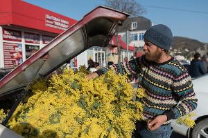 Сезон ввоза мимозы из Абхазии в Сочи ©Фото Нины Зотиной, Юга.ру