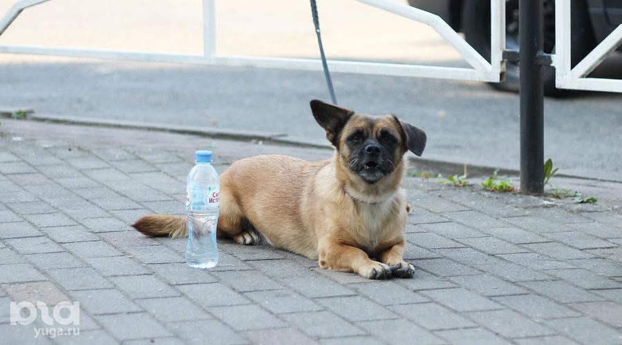 Летняя жара ©Фото Дмитрия Пославского, Юга.ру