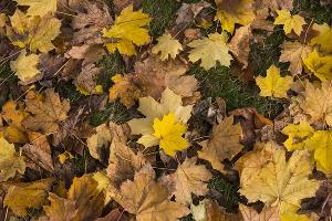 Осень ©Фото Елены Синеок, Юга.ру