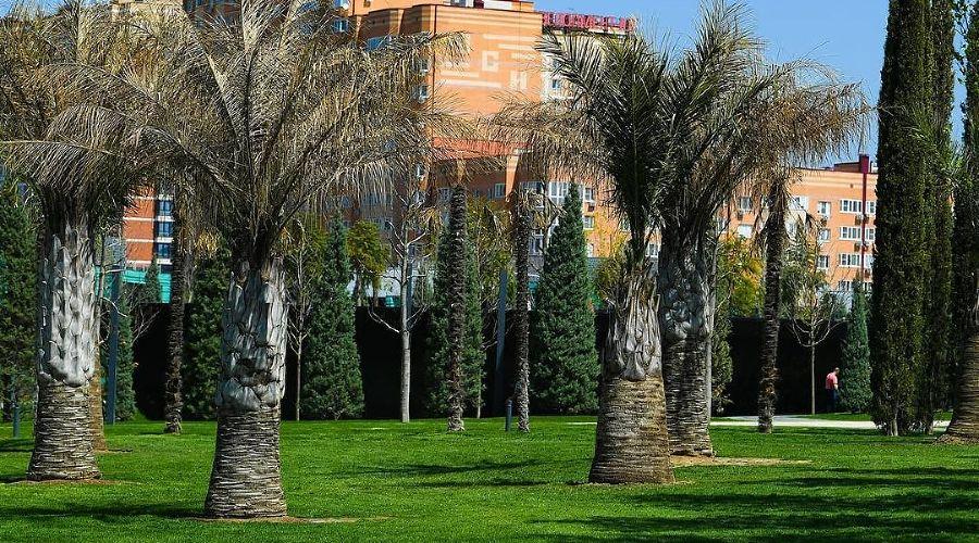 Зато у чилийской диаспоры Краснодара теперь, возможно, появился уголок для ностальгии ©Инстаграм парка «Краснодар»
